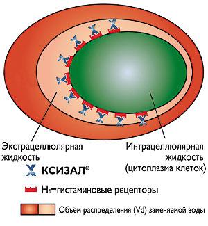 Рис. 2. Благодаря своей способности накапливаться вовнеклеточной (экстрацеллюлярной) жидкости Ксизал® (левоцетиризин) превосходит остальные антигистаминные препараты поспособности оккупировать H<SUB>1</SUB>-гистаминовые рецепторы®