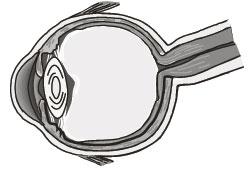 Lucentis достоверно улучшает остроту зрения