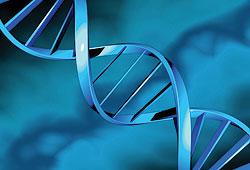 «Novartis» продлевает сотрудничество с«Alnylam» вобласти технологий РНКи
