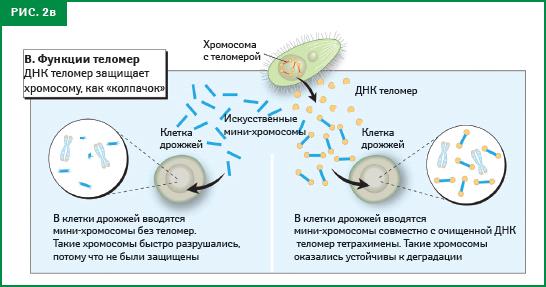 рис. 2в