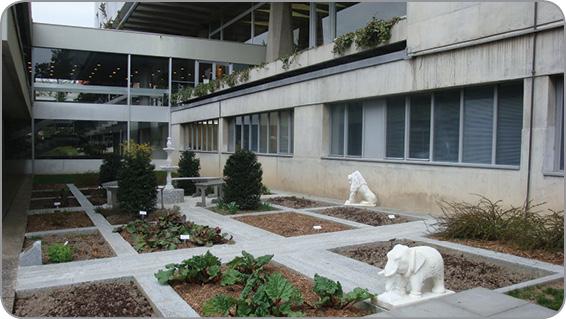 Настанова ВООЗ із належної практики вирощування та збору лікарських рослин