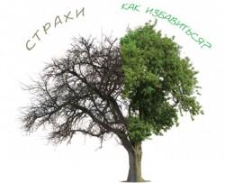 «Дерево страхов» аптечных работников и«партнерский маркетинг»