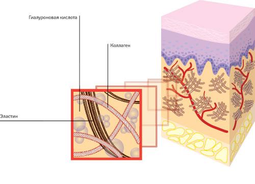 Мезоцеллс™: помогает всохранении иобразовании нового коллагена, возвращает коже эластичность, вследствие чего она выглядит молодой издоровой