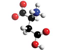 Открыт белок, приводящий кразвитию ожирения
