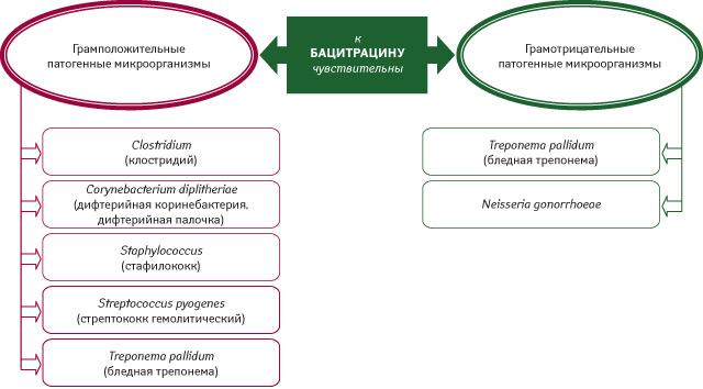 Антимикробная активность бацитрацина