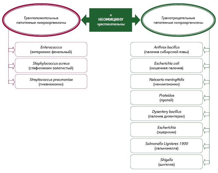 Антимикробная активность неомицина