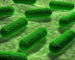 Как неправильное питание изменяет микрофлору кишечника