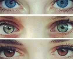 Чем определяется цвет глаз?