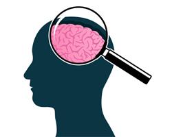 Нейробиологи выявили ключевой признак умного человека