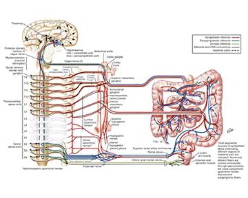 «Кишечный» мозг или все-таки головной: как относиться кпробиотикам?