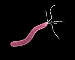 Какие бактерии помогут защитить женщин отрассеянного склероза?