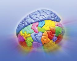 Как улучшить работу мозга вовремя учебы?