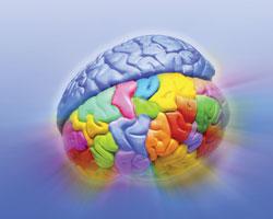 5 продуктов, которые укрепляют ваш мозг