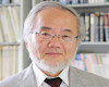 Аутофагия— фундаментальный механизм, балансирующий награни Нобелевская премия пофизиологии илимедицине
