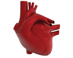 Американские ученые дают советы, как снизить риск развития сердечно-сосудистых заболеваний