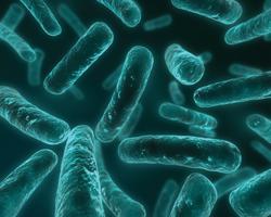 пробиотики при аллергии на белок коровьего молока