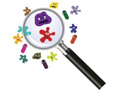 Как иммунная система определяет опасные бактерии вкишечнике?