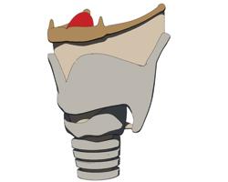 Гормоны щитовидной железы могут рассказать опроблемах сартериями