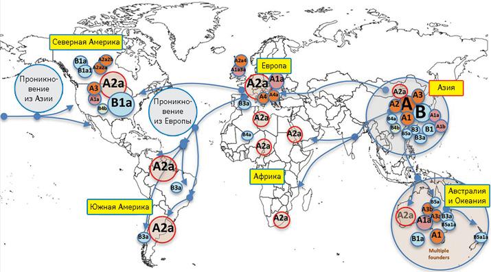 Изыскания опутях распространения нового коронавируса вчеловеческой популяции поданным, представленным наплатформе соткрытым доступом «Nextstrain» (Gómez-Carballa A. etal., 2020)