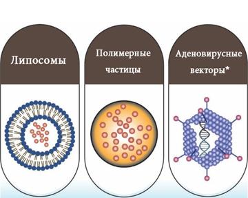 Субъединичная или векторная? В капсуле или спрее? Разработка вакцин от COVID-19 2-го поколения